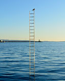 Single bird on top of the ladder on the sea. Bird on the top of the ladders which are stuck in the sea with blu sky and navy blue sea in the background Royalty Free Stock Image