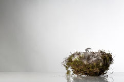 Single birds nest Stock Images