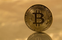 Single bitcoin with reflection on gold background Royalty Free Stock Photo