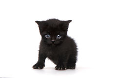 Single Black Kitten on White Background With Big Eyes Royalty Free Stock Images