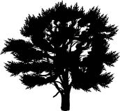 Single black pine silhouette isolated on white Stock Photography