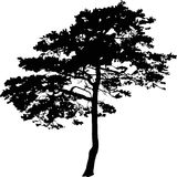 Single black pine tree Royalty Free Stock Images
