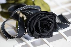 Single black rose. With ribbon on white background Royalty Free Stock Images