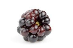 Single blackberry. Against white background Stock Photography