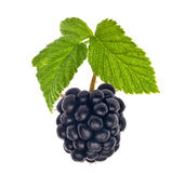 Single blackberry with green leaves Royalty Free Stock Photos