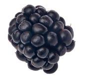 Single blackberry isolated on white Stock Image