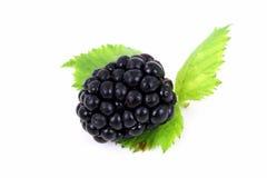 Single Blackberry Isolated on White Background Royalty Free Stock Image