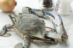 Single blue crab. Ready to cook Royalty Free Stock Image