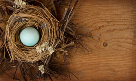 Single blue egg in a nest, Royalty Free Stock Photography