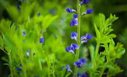 Blue flower on green Stock Photos