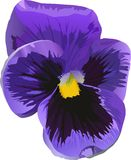 Single blue flower on white Stock Image