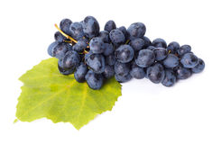 Single blue grape cluster on leaf Royalty Free Stock Photography
