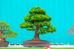 Single bonzai plant Stock Photos