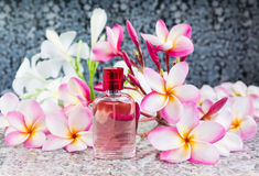 Single bottle of sweet pink fragrant perfume Stock Photography