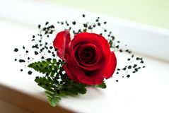 Single Boutonniere Stock Images