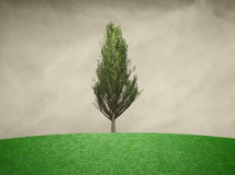 Single branched cypress tree background. Single branched cypress tree with green colored leaves. Tree render filter used Stock Photos