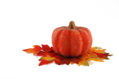 Single bright colored pumpkin thanksgiving Royalty Free Stock Image