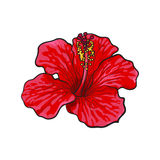 Single bright red hibiscus tropical flower, sketch vector illustration Royalty Free Stock Images