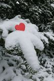 Single bright red Valentines heart on a snow laden Balsam fir tree branch. Single bright red Valentines heart laid on a snow laden Balsam fir tree branch Royalty Free Stock Photography