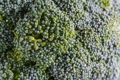 Single Brocoli Stem Top Bush Vegetable Fresh Cooking Raw Ingredi Stock Photos