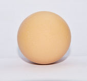 Single brown chicken egg Royalty Free Stock Images