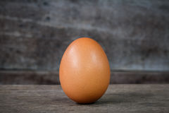 Single brown chicken egg Royalty Free Stock Photography