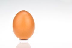 Single brown chicken egg. On white background Royalty Free Stock Photo