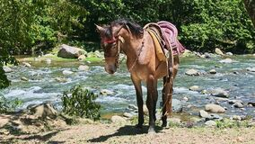Single brown domestic horse with rural saddle stands on mountain riverbank