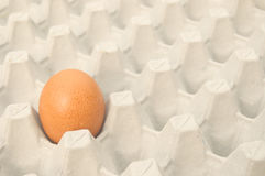 Single brown egg in a cardboard carton Stock Images