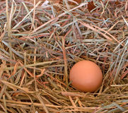 Single Brown Egg in Hay. A single fresh brown chicken egg nestled in grass hay stock image