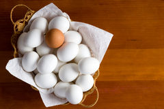 Single brown egg among many white ones Stock Images