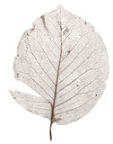 Single brown skeleton leaf Royalty Free Stock Photo