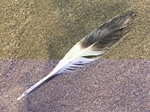 Single Brown and White Feather on the Beach royalty free stock photo