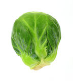 Single Brussels Sprout Stock Photo