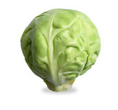 Single brussels sprout  on white with path Stock Images
