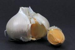Single Bulb and clove Elephant Garlic. royalty free stock photo