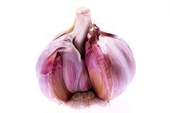 Single bulb of garlic isolated on white background - macro Royalty Free Stock Photography