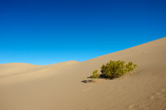 Single Bush in Desert Stock Images