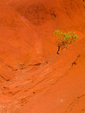 Single bush in dry red rocks Royalty Free Stock Images