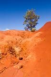 Single bush in dry red rocks Stock Photo