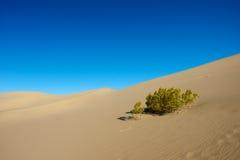 Single Bush In Desert Stock Images