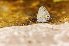 Single butterfly catch on stone floor with golden bokeh Royalty Free Stock Photography
