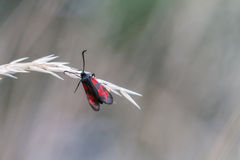 Single Butterfly on an isolated spike. Picture of a Single Butterfly on an isolated spike Royalty Free Stock Photos