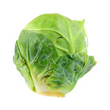 Single Cabbage Bud Royalty Free Stock Image