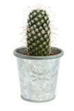 Single cactus in a silver pot over white Royalty Free Stock Image