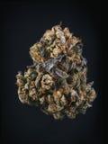 Single cannabis bud & x28;berry noir strain& x29; isolated on black Stock Photography