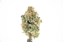 Single cannabis bud & x28;ob reaper strain& x29; isolated on white - Stock Image