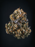 Single cannabis bud & x28;berry noir strain& x29; isolated on black Stock Photography