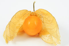 Single cape gooseberry (physalis peruviana) on white background Royalty Free Stock Photos
