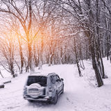 Single car on a winter road in the forest Stock Image